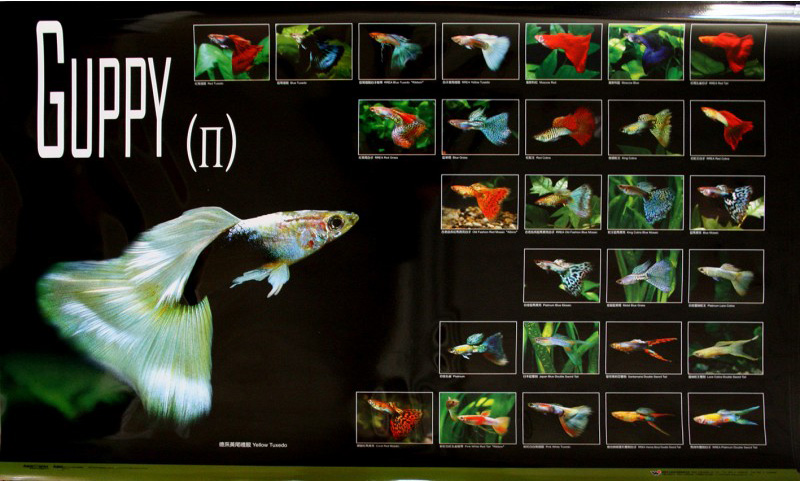 posters poissons  Poster56