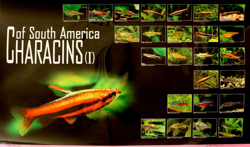 posters poissons  Poster61