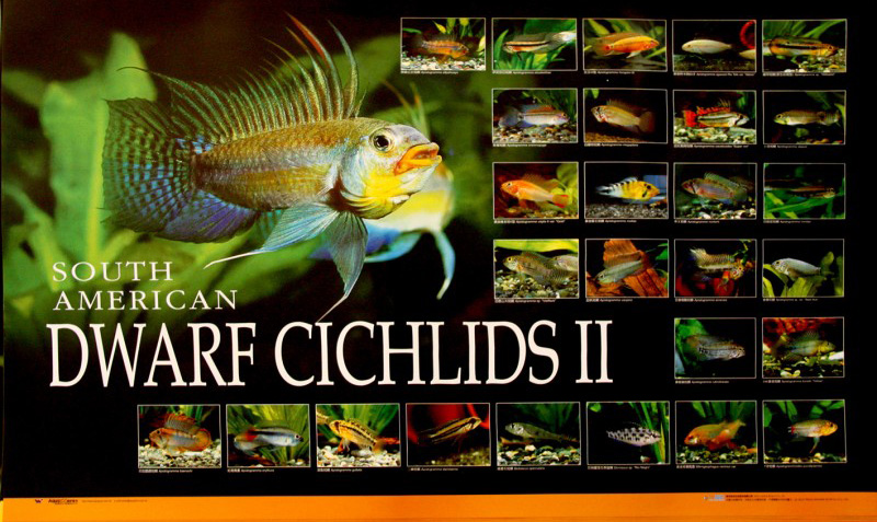posters poissons  Poster63