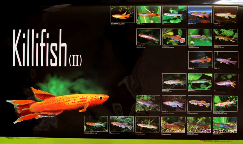 posters poissons  Poster65