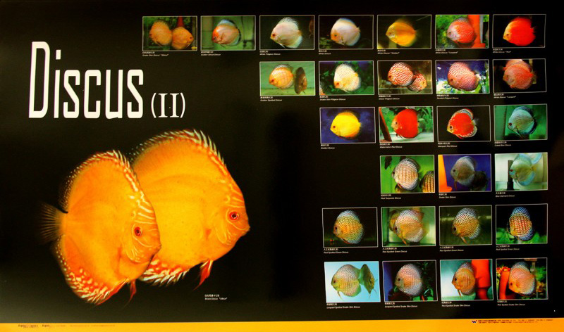 posters poissons  Poster67
