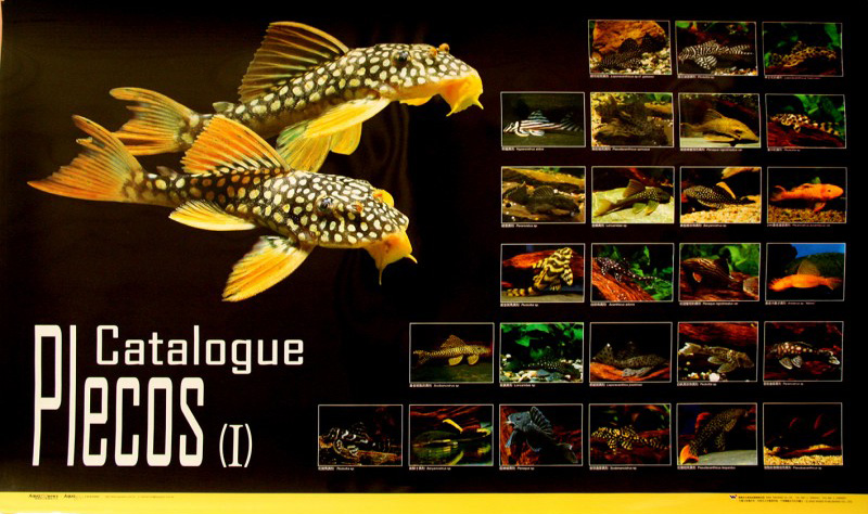 posters poissons  Poster68