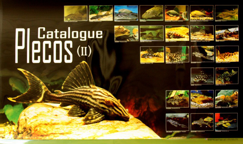 posters poissons  Poster69