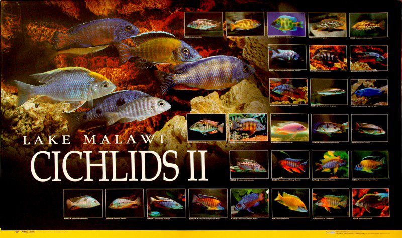 posters poissons  Poster70