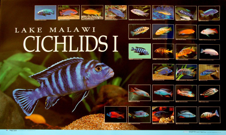 posters poissons  Poster71