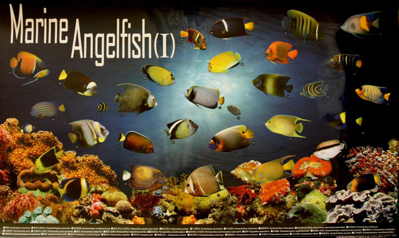 posters poissons  Poster77