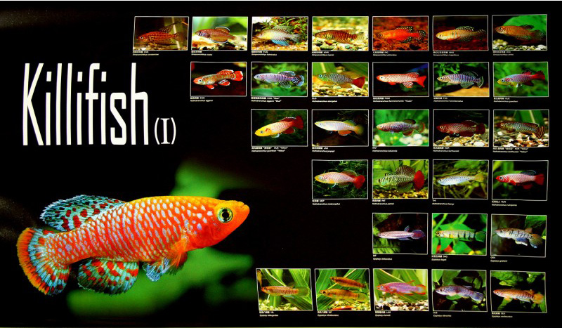posters poissons  Poster78