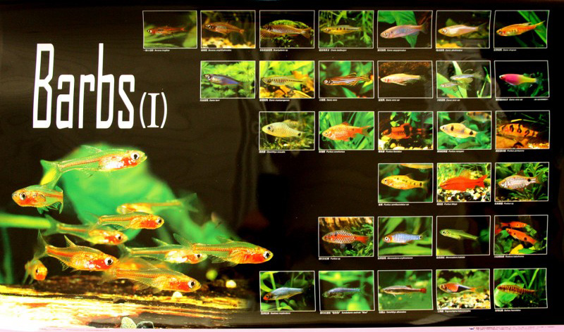 posters poissons  Poster80