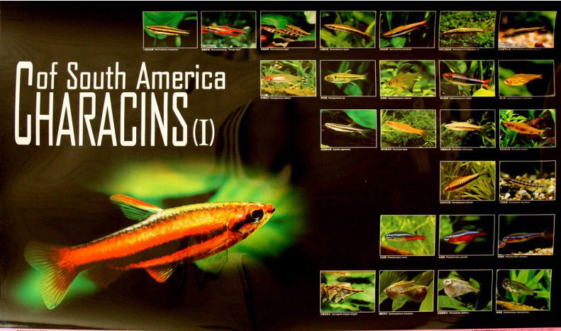 posters poissons  Poster81