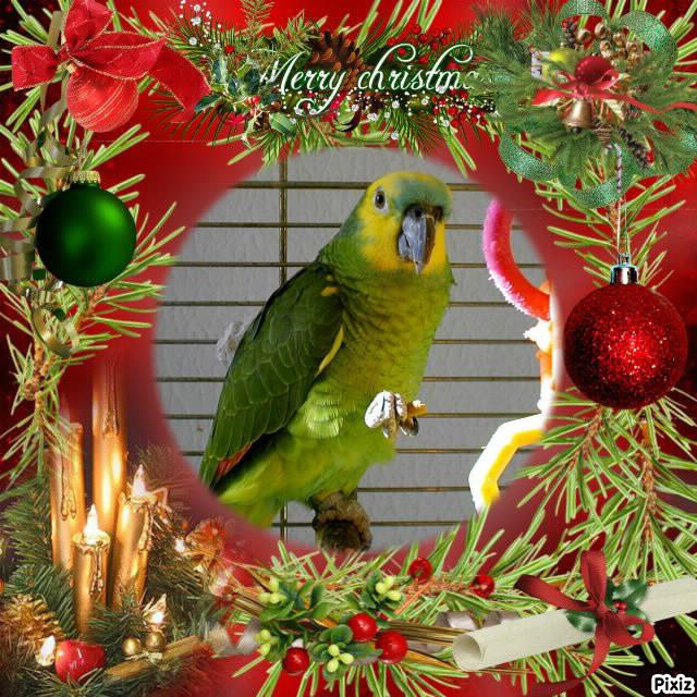 Bon Noël Pixiz_10