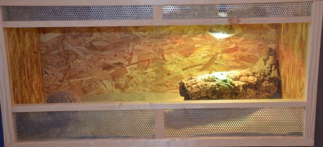 Nos installations - Terra pogona Dsc_4751