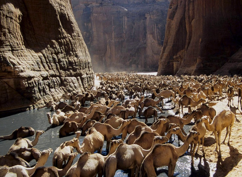 Sahara - Tchad - Ennedi - Guelta d'Archeï Tumblr10
