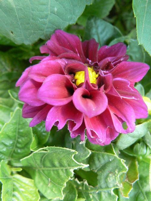 floraison aout P1130612