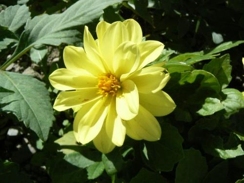 floraison aout P1130616