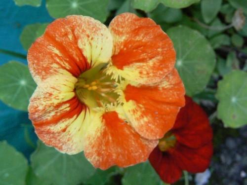 floraison aout P1130618