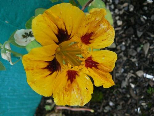 floraison aout P1130720