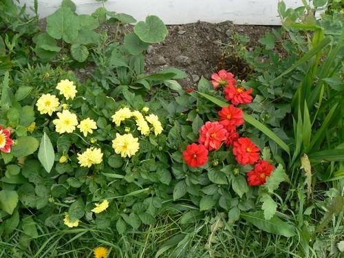 floraison aout P1140612