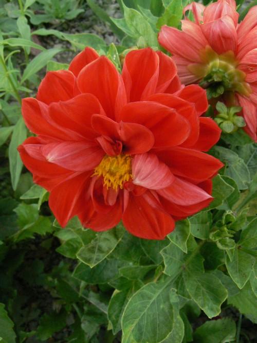 floraison aout P1140713