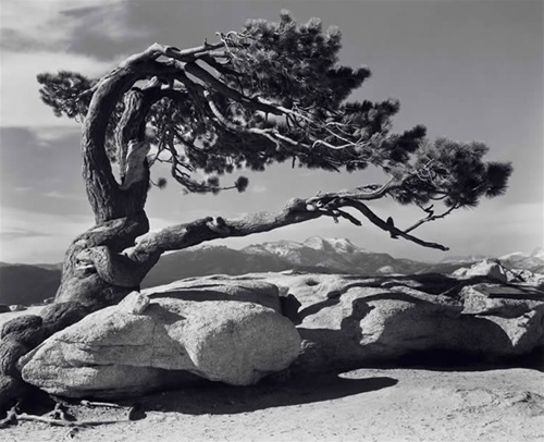 Ansel Adams [photographe] A1595