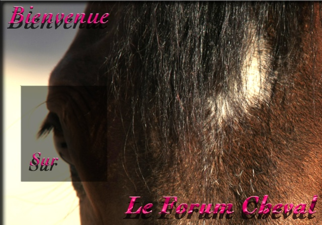 Le Forum Cheval ! Bienve10