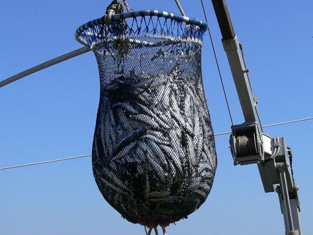 Des pêches non déclarées identifiées avec Google Earth 800px-14