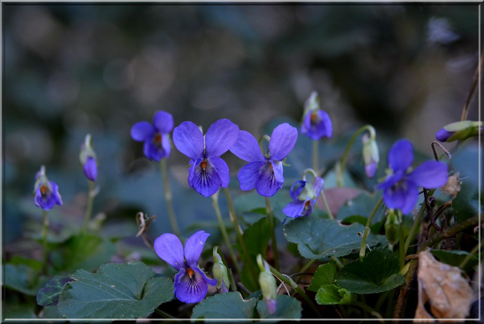 Le sud Drôme!!! Violet10