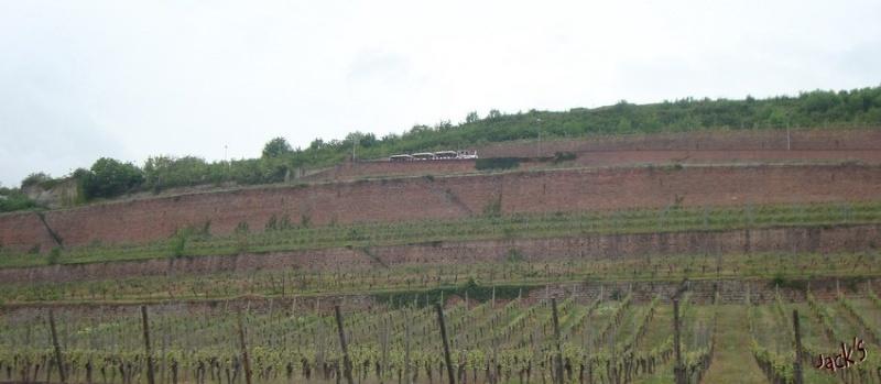 Petit train touristique d'Obernai  Dsc05711