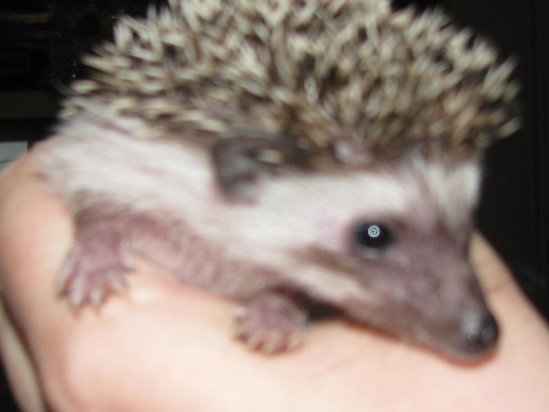 Voici Muffin(la soeur de Biscuit et Spike)!!! Photo_30