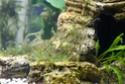 Conseil achat matériel pour aquarium 240L Img_1110