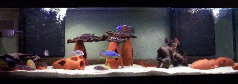 Aquarium 600 litres de tyrano34 100_4210