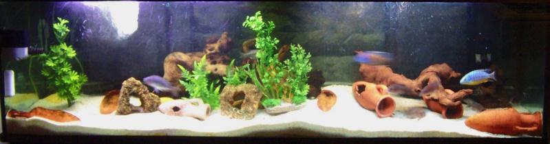 Aquarium 600 litres de tyrano34 100_9610