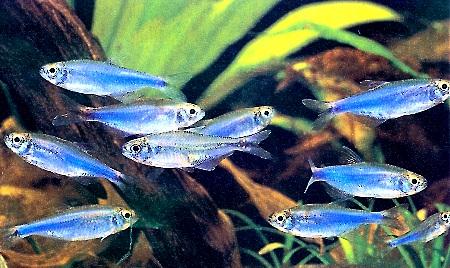 Quiz expert - pour les accros des poissons eau douce-saumâtre (600 points) - Page 2 74786510