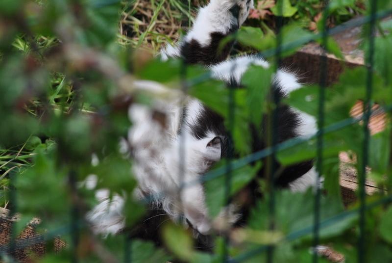 Kitty Cat, née le 1er août 2010 STATUT :CHAT LIBRE - Page 4 Dsc_0020