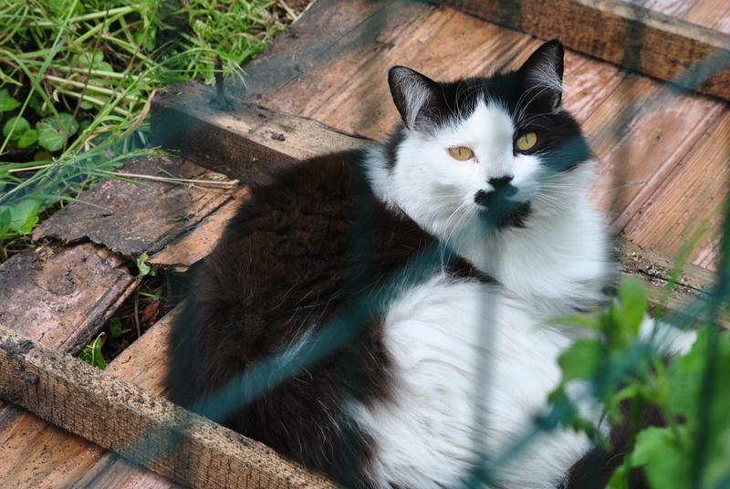 Kitty Cat, née le 1er août 2010 STATUT :CHAT LIBRE - Page 4 Dsc_0021