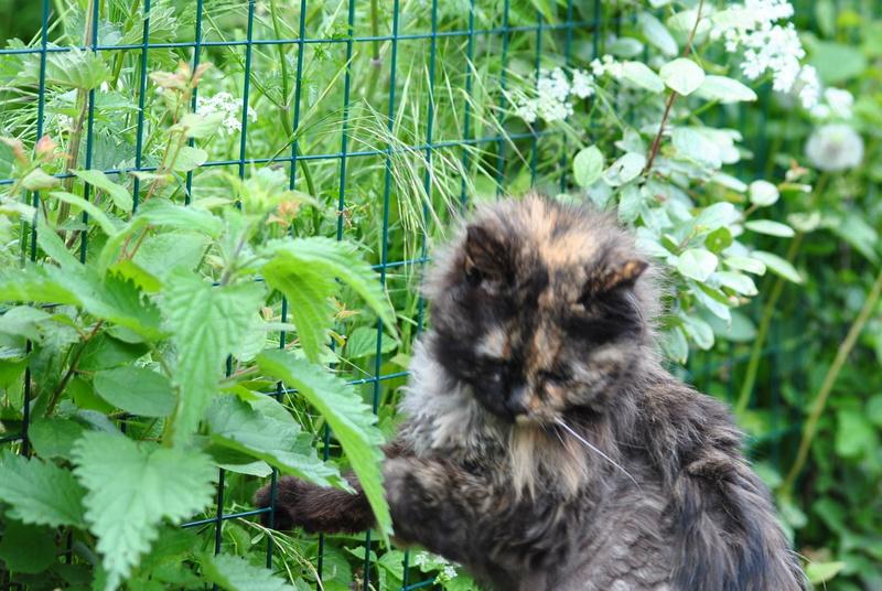 Kitty Cat, née le 1er août 2010 STATUT :CHAT LIBRE - Page 4 Dsc_0022
