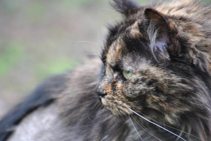 Kitty Cat, née le 1er août 2010 STATUT :CHAT LIBRE - Page 4 Dsc_0023