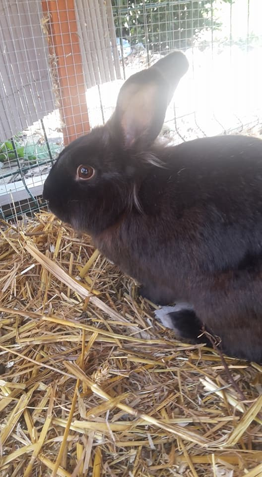 les lapins  Loisa10