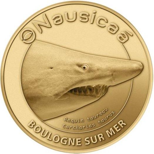Boulogne-sur-Mer (62200)  [Nausicaa] Requin10
