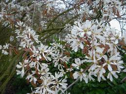 Fleurs de saison Amylan10