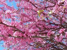 Fleurs de saison Arbre_11