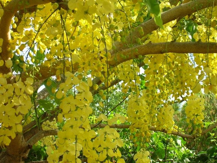 Fleurs de saison Cityse10