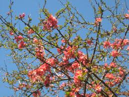 Fleurs de saison Cognas10