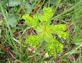 Fleurs de saison Euphor10