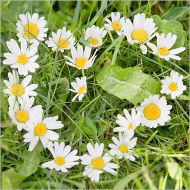 Fleurs de saison Paquer10