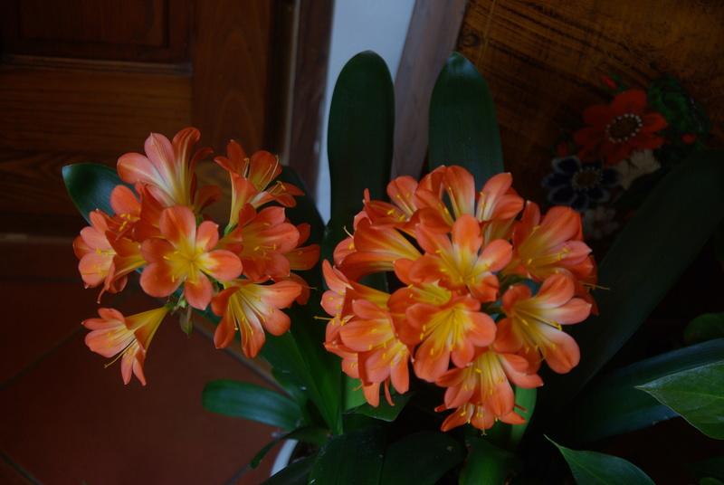 Floraisons d'intérieur  - Page 5 Imgp7610