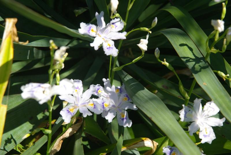 Floraisons du mois d'avril - Page 20 Imgp7636