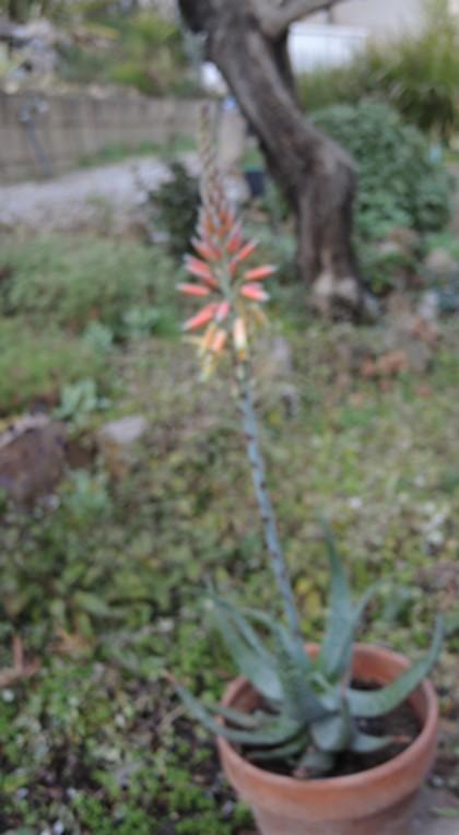 deux ou trois fleurs dans le vent - Page 4 Dscn6411