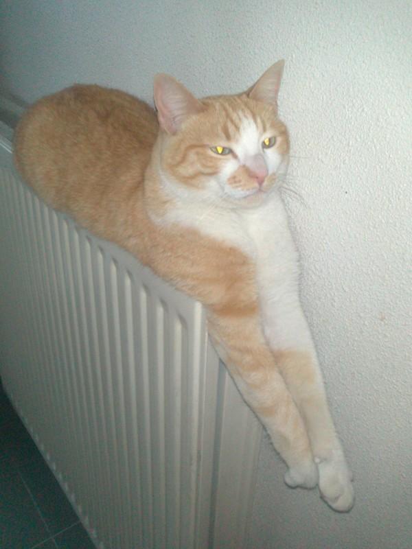 Perdu Marty chat roux tigré et blanc à Toulouse 20310