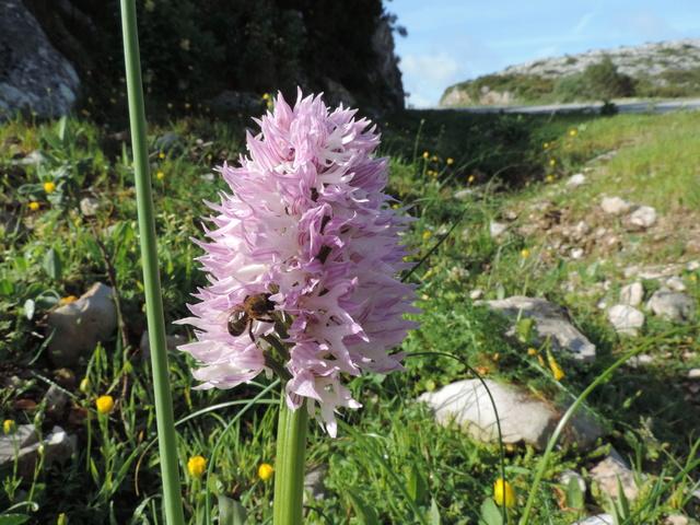 Orchidées Sesimbra, Setubal distr. Portugal Dscn9013