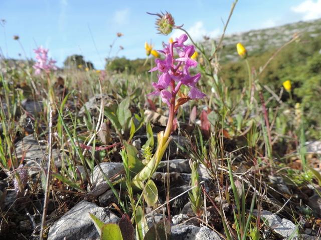 Orchidées Sesimbra, Setubal distr. Portugal Dscn9016